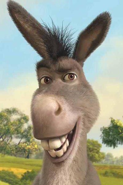 Donkey Ewe