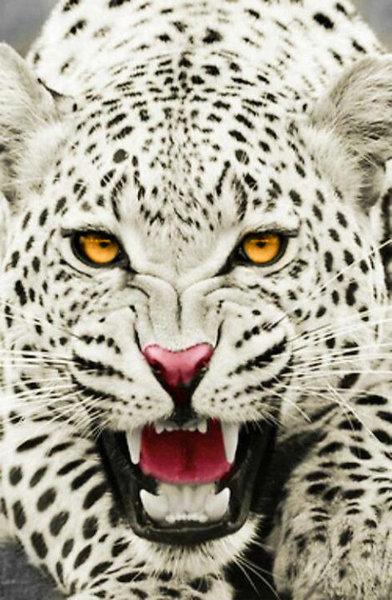 Nahjra The White Panther